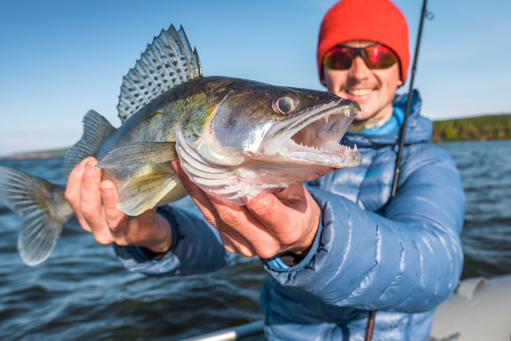 Perfect Bass Fishing Guides For Beginners